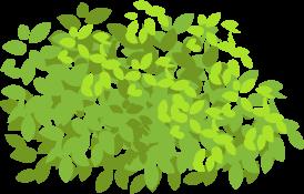 札幌の季節の花など