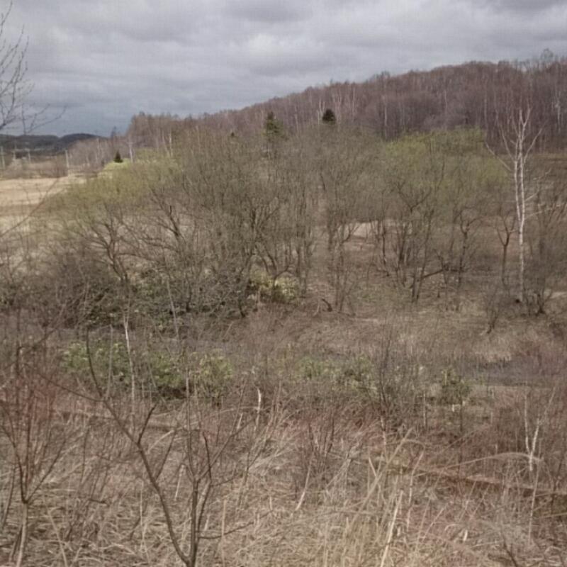 厚別区を過ぎたあたりの原生林
