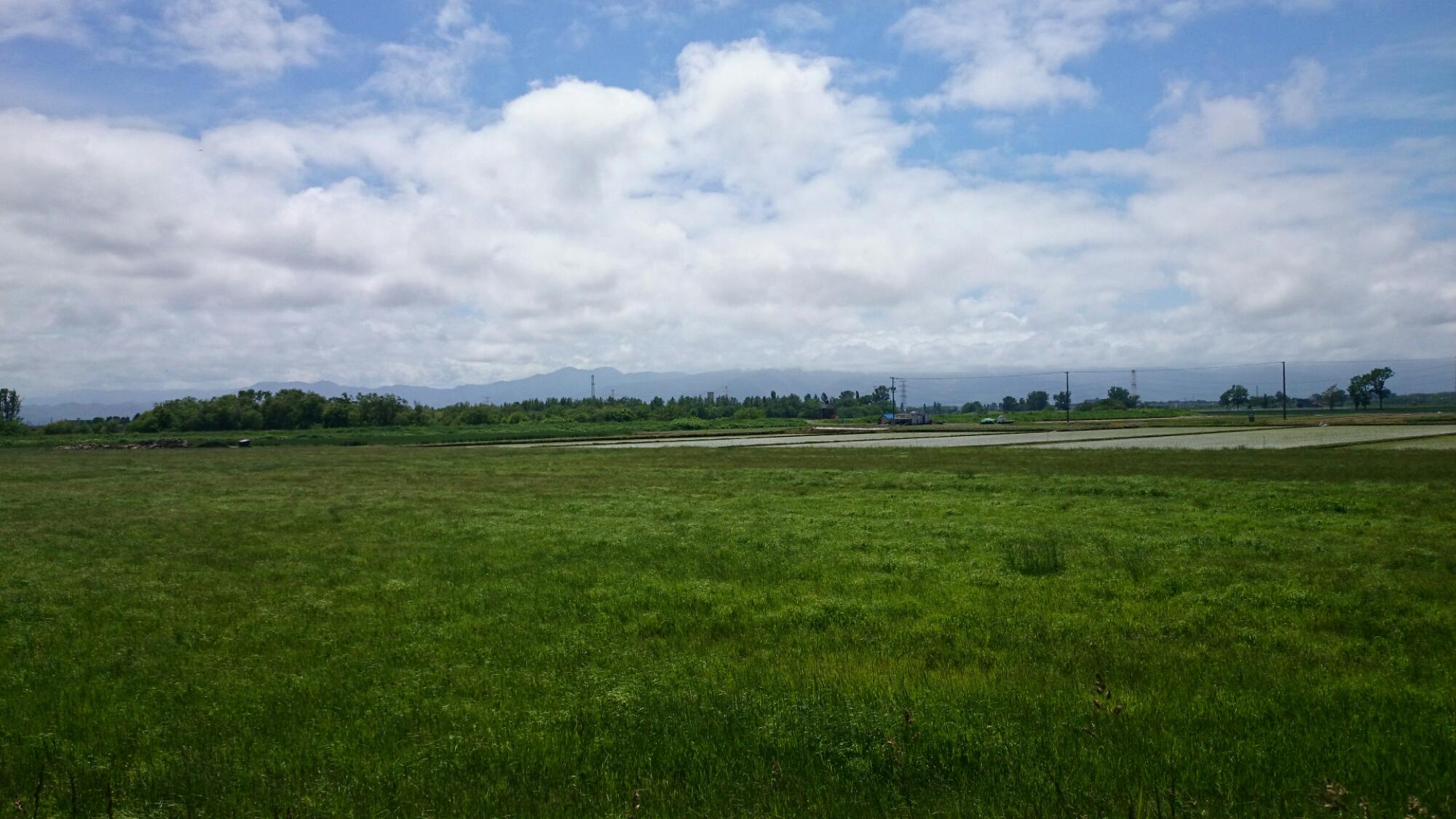 石狩市の畑。道央新道あたり。