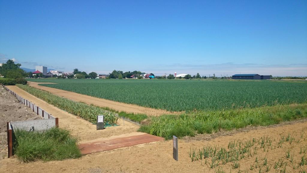 札幌市東区伏古の畑